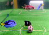 鱼缸中的绿茵场
