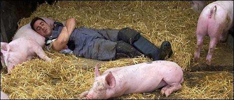 英男子与猪同吃同住四天:母猪友好