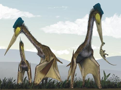 翼龙是最大型的空中霸主之一,与长颈鹿一样高,其膜状翅膀展开时可达10米宽