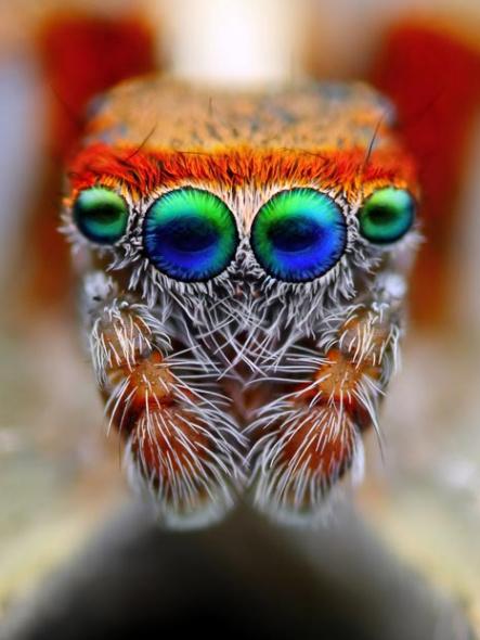 美丽而怪异的眼睛