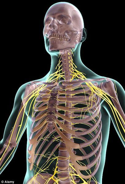 这种荧光液体可以注射到患者体内,使患者体内的神经发光,从而让通常不可见的神经现形。
