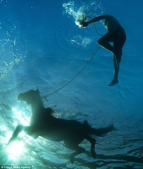 马其他摄影师水下拍到赛马水中畅游优雅瞬间