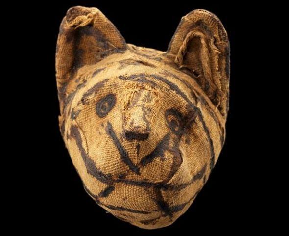 一个用猫制作的木乃伊的头部