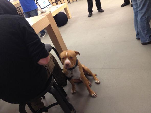 有顾客牵着宠物狗入店