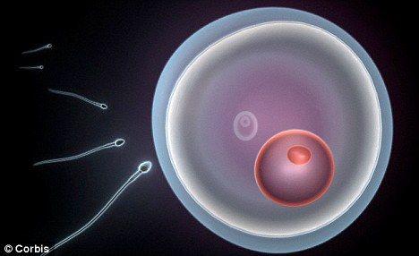 通过阻断促使精子游动的马达的燃料源,男性能够暂时丧失生育能力