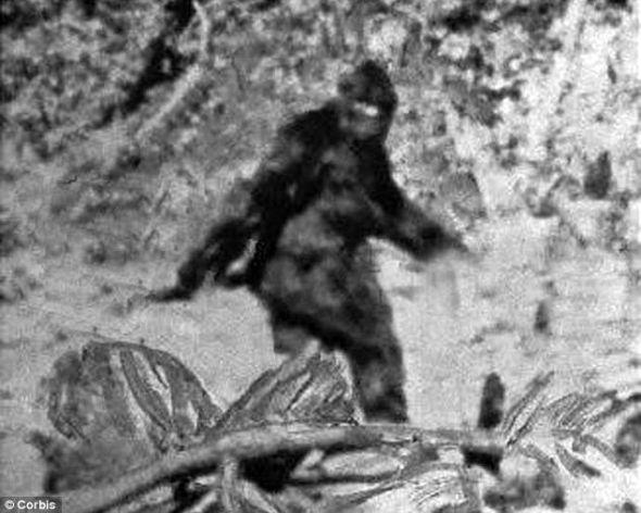 迄今为止唯一一段大脚怪录像:这段录像是前牛仔竞技表演骑手罗杰-帕特森1967年在加利福尼亚州拍摄到的。猎鹰计划科研组希望获得新的无可争辩的录像