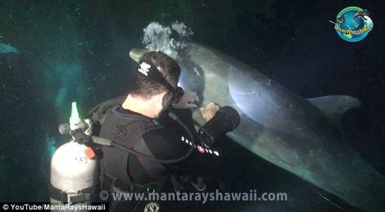 钓鱼线缠住这条海豚。一个钓鱼钩倒钩在它的胸鳍上。