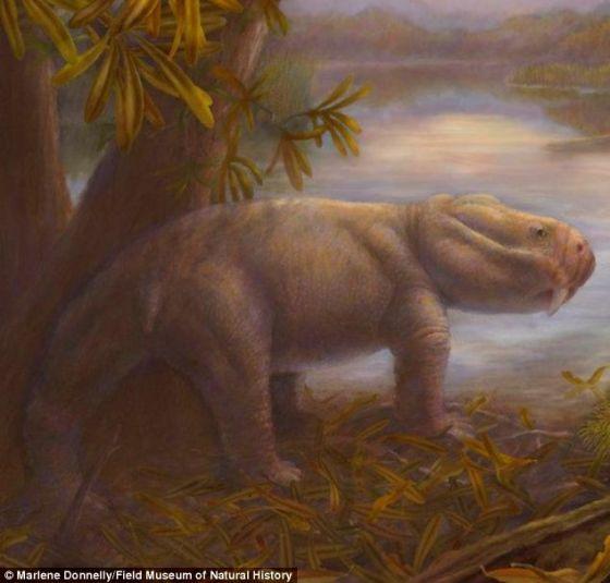 二齿兽(学名:Dicynodon)曾经是繁盛于二叠纪晚期的草食性似哺乳爬行动物,在2.52亿年前的大灭绝事件中数量锐减。新的研究显示,这场灾难使其他草食性动物崛起,并最终导致恐龙的出现。