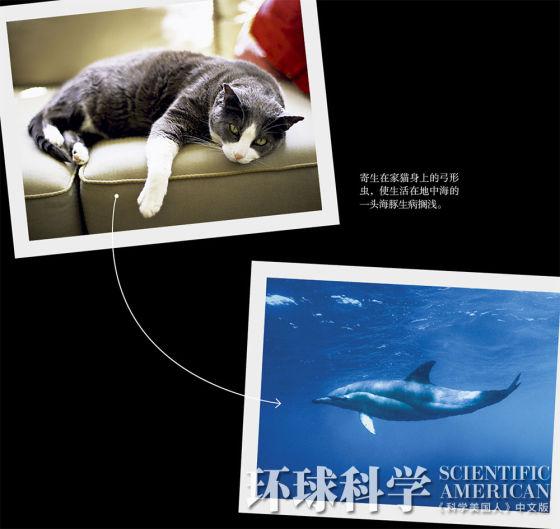 陆地疾病流入海洋:猫咪排泄物害死海豚
