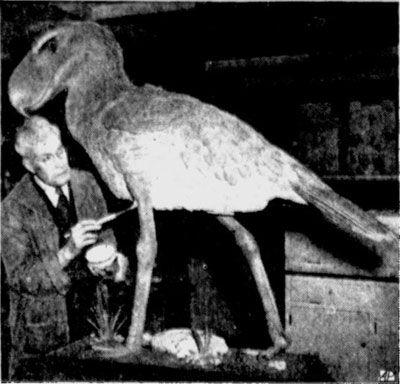 早期艺术家和他的骇鸟复原作品