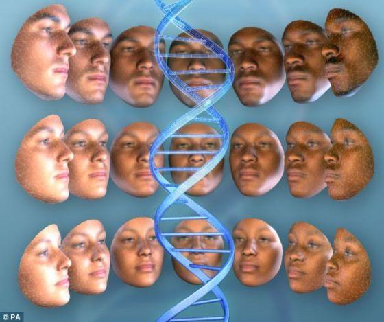 将特定的DNA标记与面部特征联系在一起,科学家能够利用在犯罪现场采集的DNA的基因标记绘制犯罪分子的面部图像。