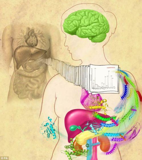 """研究发现人类基因组或者说遗传密码要比科学家此前认为的复杂的多。美国约翰-霍普金斯大学教授阿克希勒什-帕蒂表示:""""你可以将人体想象成一家巨大的图书馆,每个蛋白质只有其中的一本书。现在的问题是,我们没有一个完整的目录,帮助我们查到每一本书的位置。"""""""