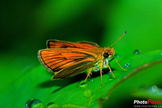 红色的蝴蝶在绿色的树叶上格外显眼,昆虫和绿叶的颜色形成了生动的