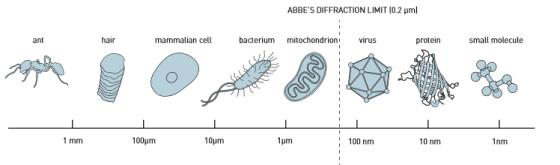 在19世纪末,恩斯特•阿贝(Ernst Abbe)对光学显微镜的分辨率限制做出了界定,认为大约是光波长的一半,即约为0.2微米。这意味着科学家们可以辨别完整细胞,以及其中一些被称为细胞器的组成部分。然而,他们却无法分辨一个正常大小的病毒或者单个蛋白质。