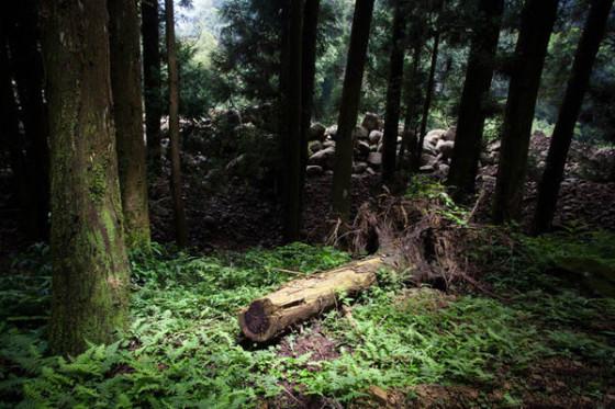 森林系女孩外拍技巧分享