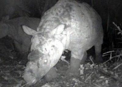 科技时代_环保组织称用摄像机捕捉到最珍稀的犀牛镜头