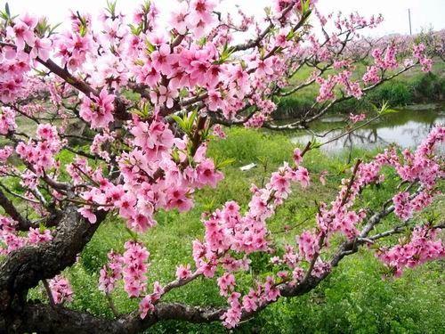 上海拍花景地点推荐