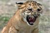 十大最令人难以置信的杂交动物