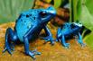 世界十大怪蛙