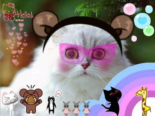 软件学园 > 正文    怎么样,眼睛变大,并添加了睫毛和腮红的猫咪是不