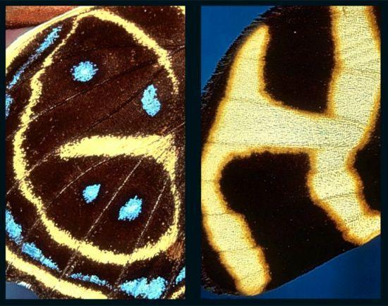 摄影师24年拍全蝴蝶翅膀上的26个字母(组图)