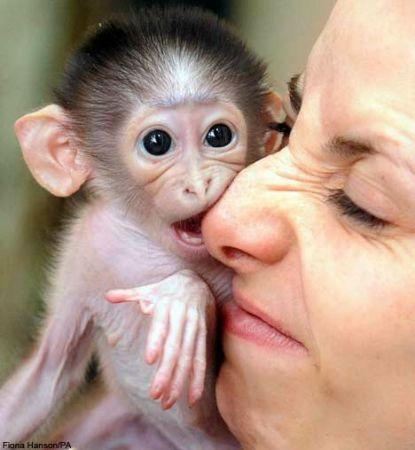 伦敦猴宝宝将玩具熊当妈妈(组图)