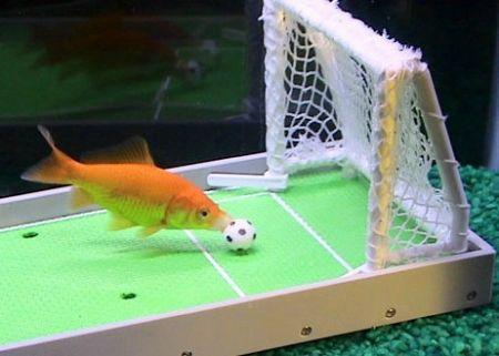 世界上最聪明的鱼会玩水中大灌篮(组图)