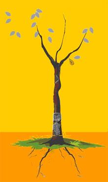 10、解释:黑灰叶,遇虫子,不是密果,树枝二个以上,婚姻定有生死离散之痛