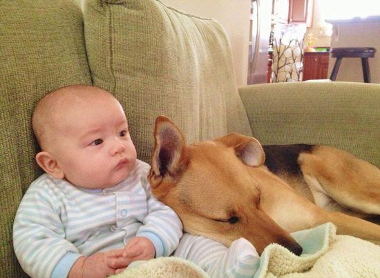 美国男婴卡特与宠物狗托比亲密相伴,照片萌煞网友.