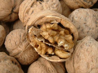 孕妇必吃的坚果:核桃(图)