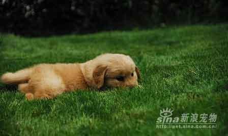 组图:超可爱的邻家小奶狗(3)