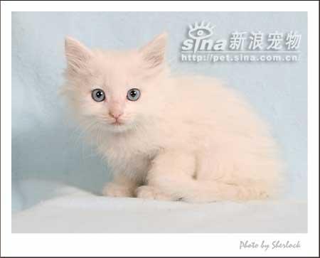 一群可爱的小奶猫等待领养哦!-流浪动物领养中心 - 猫咪有约;
