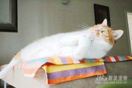 猫猫祈祷图片 可爱