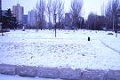 我爱你北京的雪