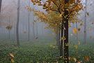 北京秋日大雾林中美景