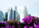 新加坡:城市中的花园