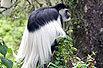 博友实拍:有贵族气质的猴子(组图)
