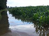 玉米地处处积水