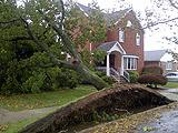 纽约粗壮大树被连根拔起