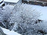 海淀:春雪站枝头万树着绒装