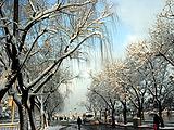 东城:三月春雪醉京城