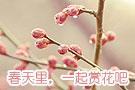 精彩图集:京城赏花季