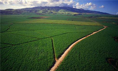 以色列的沙漠农业