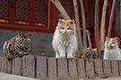 大觉寺的小猫咪