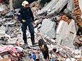 新加坡救援队寻找生还者