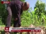 中国留学生家长在耶鲁大学种菜 使荒地变菜园