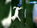 西安高校学霸狗被保安用棍打死扔垃圾桶