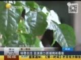 现场:辽宁特警持堵高速路口砸车窗拽出毒贩