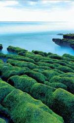 绝妙的海边绿丝绦