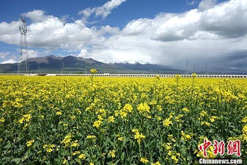 资料图:青海农作物。 <a target='_blank' href=